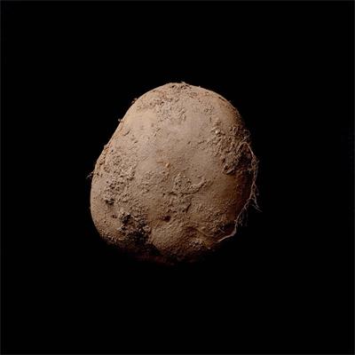 Potato #345.