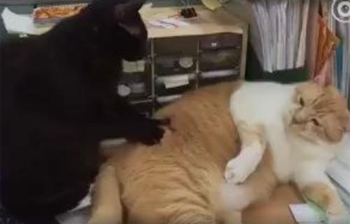 video-vo-lot-ao-tinh-dich-tai-san-bay-gay-chu-y-internet-tuan-qua-6