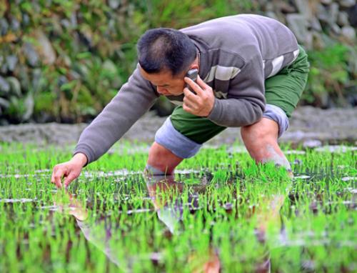 Internet, thiết bị di động đang dần phổ cập tại các vùng nông thôn ở Trung Quốc. Ảnh: Chinatechnews