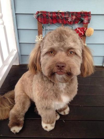 Yogi, chú chó có khuôn mặt người.