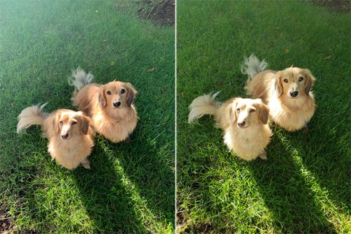 Ảnh chụp từ iPhone Xs (trái) và Galaxy S9 (phải).