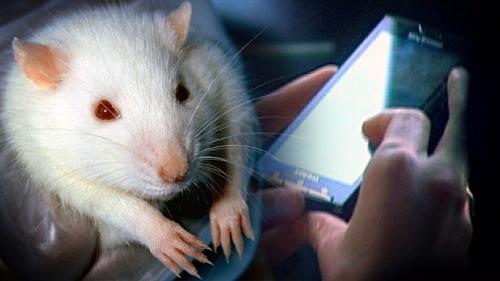Chưa phát hiện sóng di động có thể gây ung thư trên người, nhưng đã có nghiên cứu chỉ rằng nó có liên quan tới những khối u ác tính trên chuột.