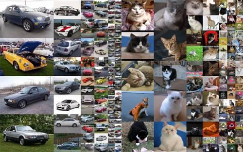 Ảnh xe và mèo giả dựng từ AI.