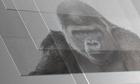 Không có iPhone, kính cường lực Gorilla Glass đã không ra đời