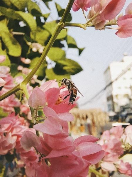 Cận cảnh chú ong kiếm mật qua ống kính Galaxy A51