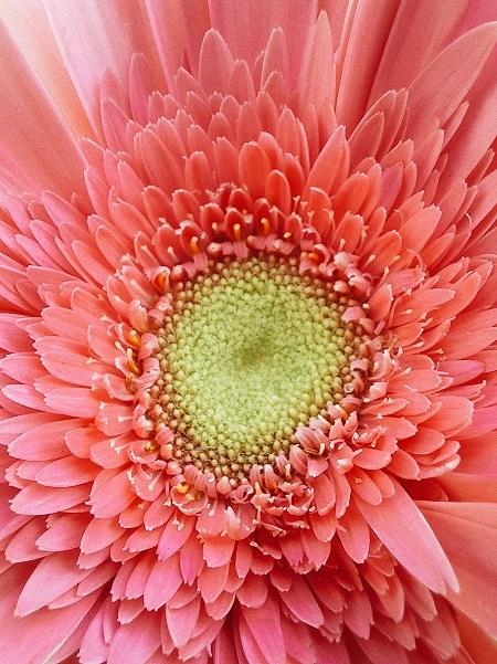 Vẻ đẹp khác biệt của một đoá hoa dưới ống kính macro chụp cận cảnh