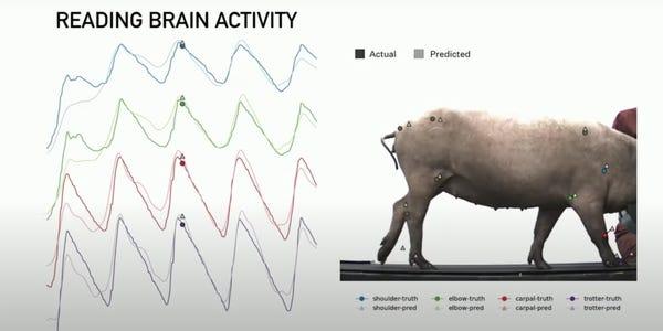 Hệ thống của Musk có thể xác định hoạt động của các chân lợn qua sóng não. Ảnh: Neuralink.