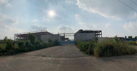 Coe dại mọc hai bên đường vào nhà máy Dekama Nam Kinh. Ảnh: Pan Ye.