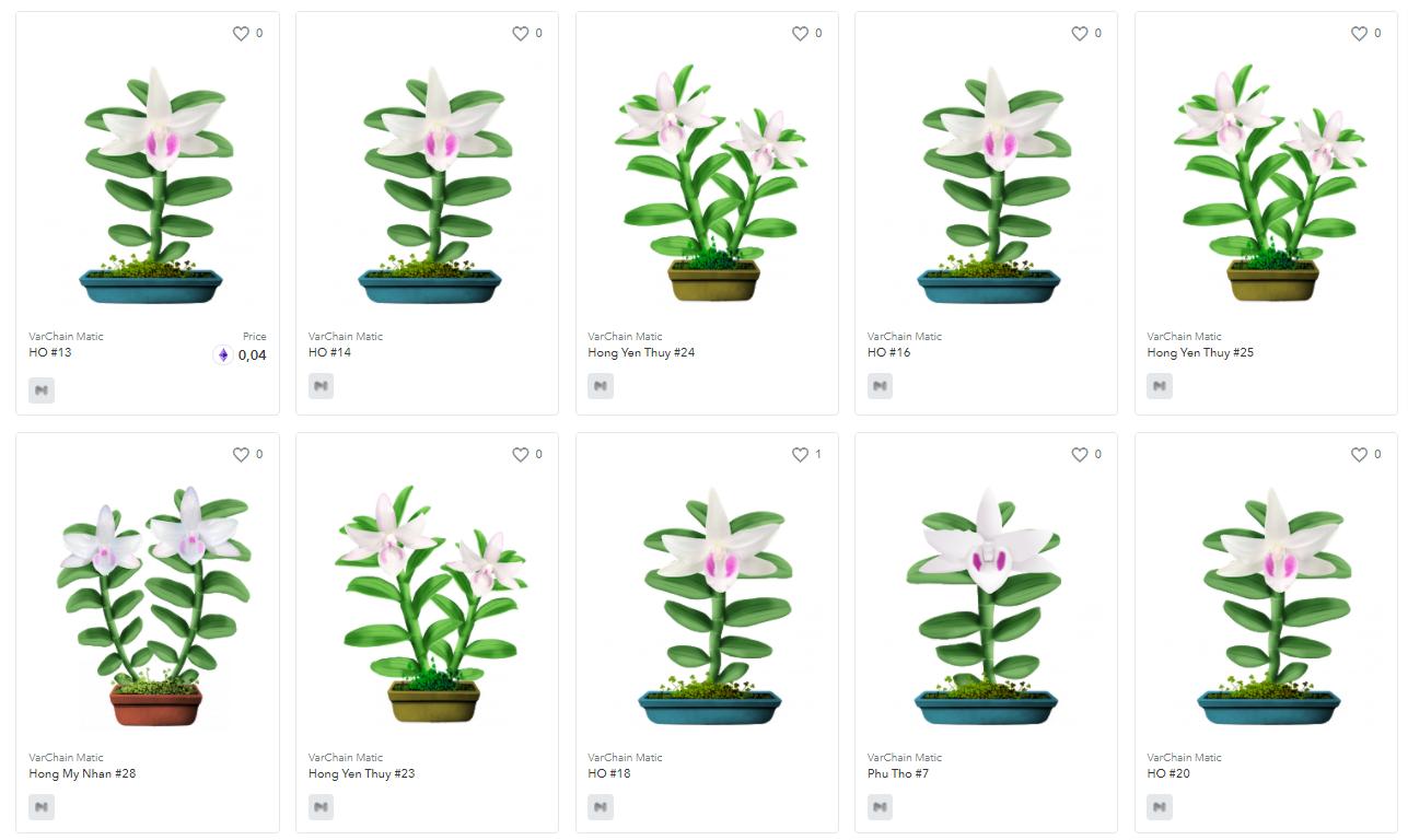 Mỗi cây lan thuộc cùng một giống sẽ được đánh số để phân biệt.